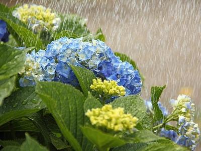 梅雨時期の大雨